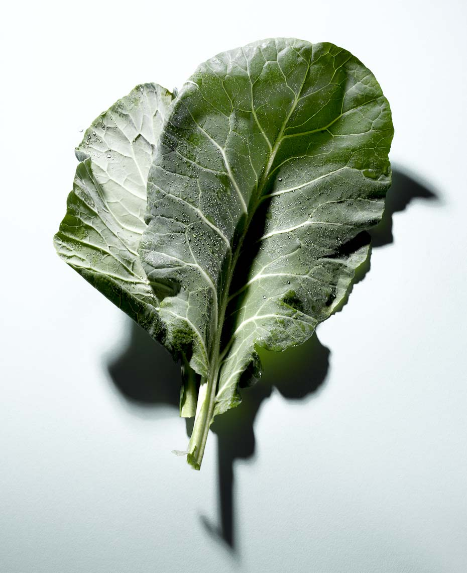 Food Still Life, Collard Green