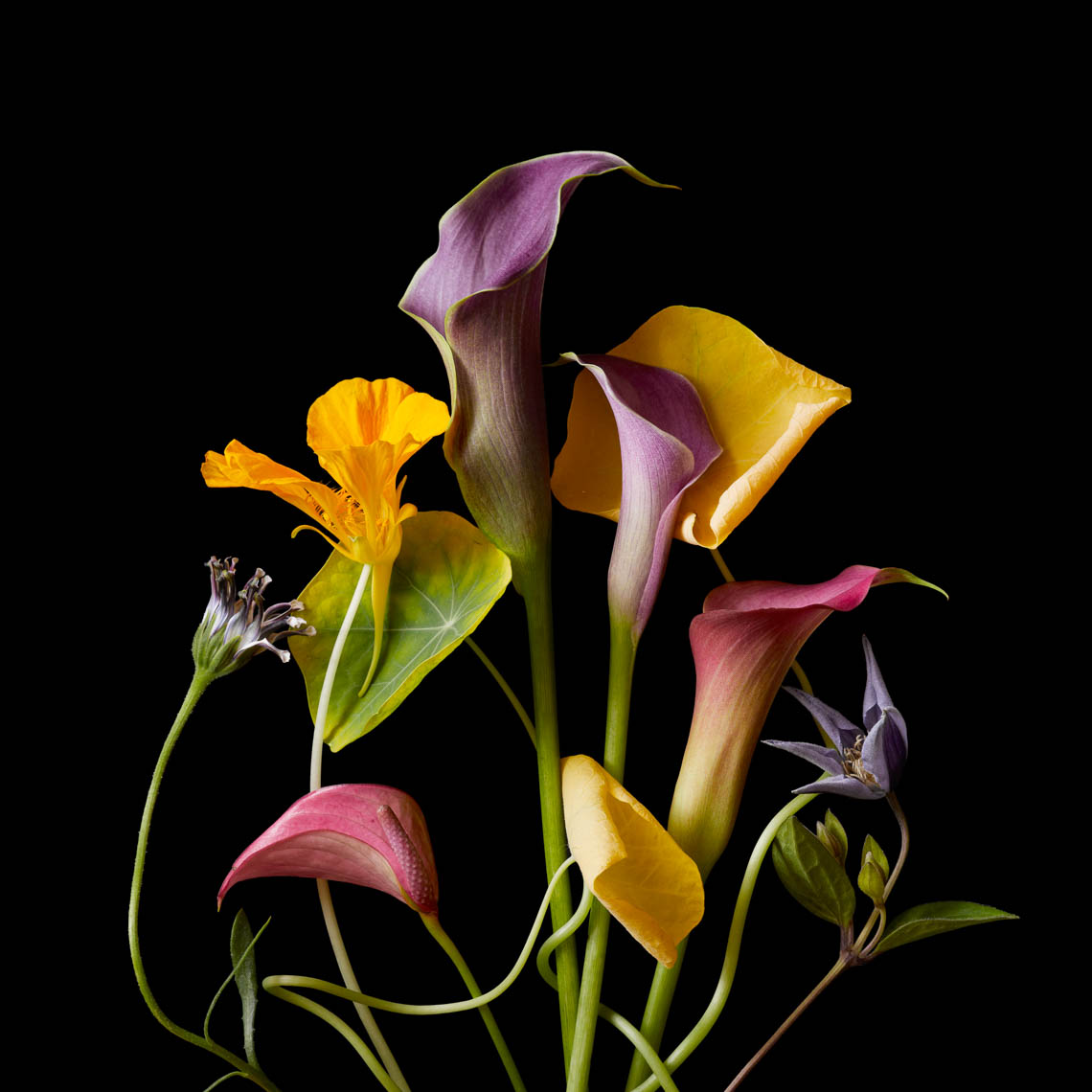 Flower Composition | Botanical Still Life